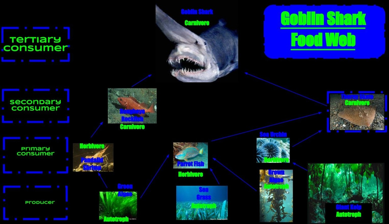 Goblin Shark Food Web Thinglink