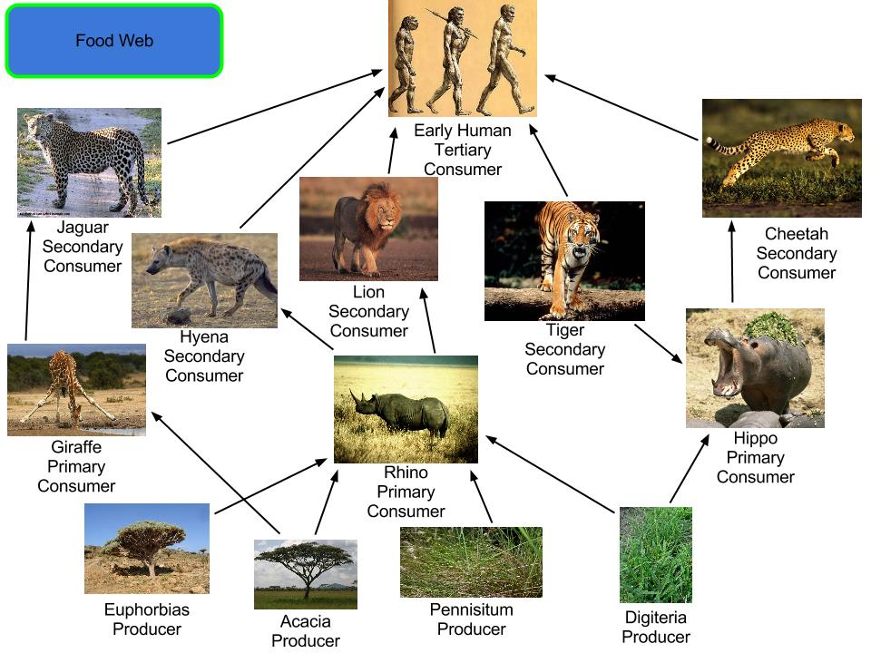 Food Chain Of A Wild Dog