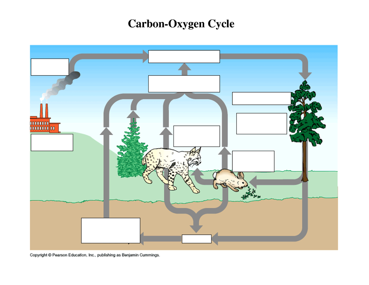 Printables Carbon Cycle Worksheet carbon cycle worksheet 5th grade intrepidpath fill in the blanks worksheets