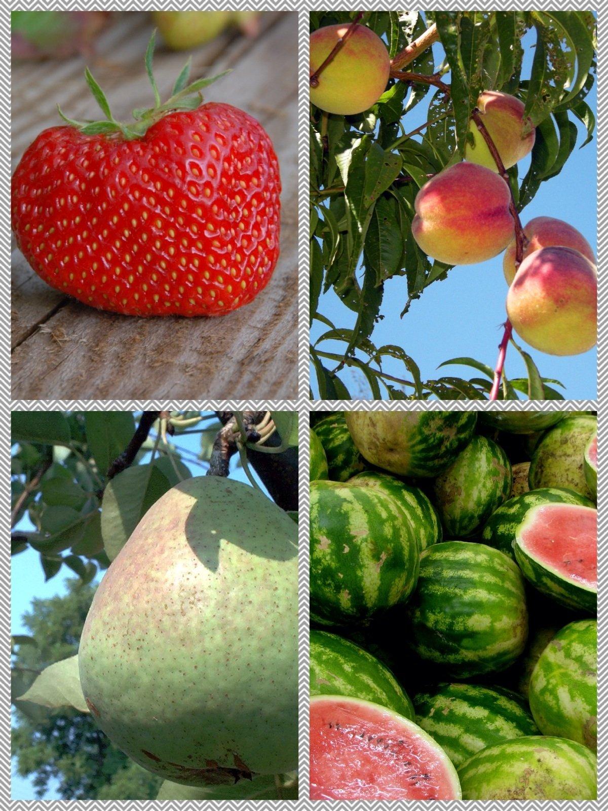 AppSmash: Fruit Names