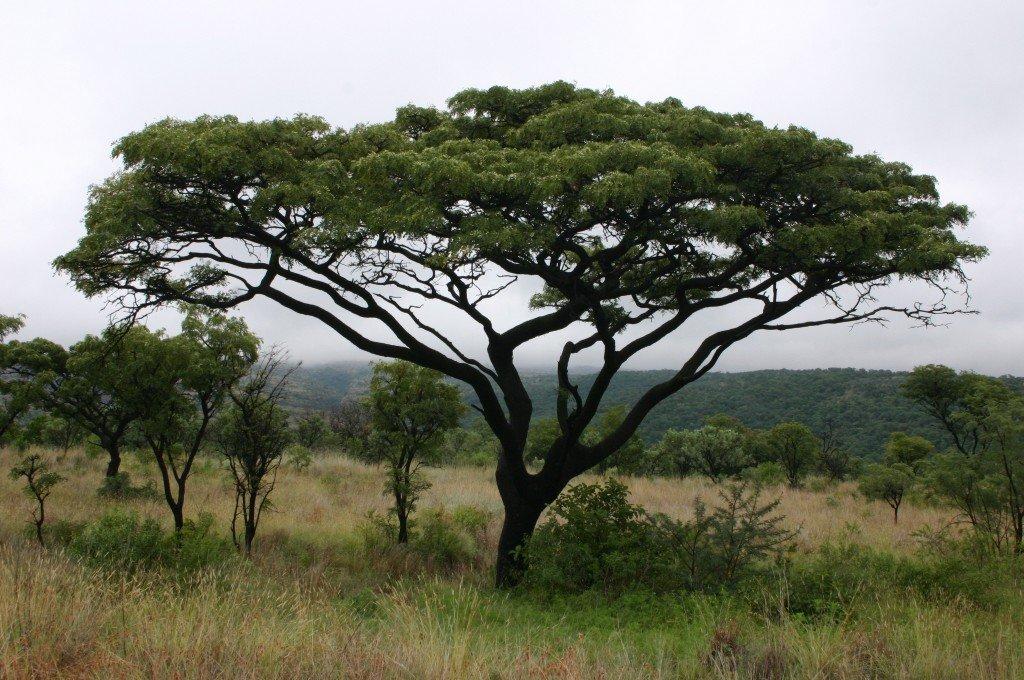 African Savannas