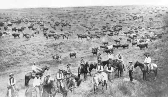 american west cattle industry revision American west revision task: revision carousel  how to develop our exam technique in the american west exam skills  cattle industry battle of little bighorn.