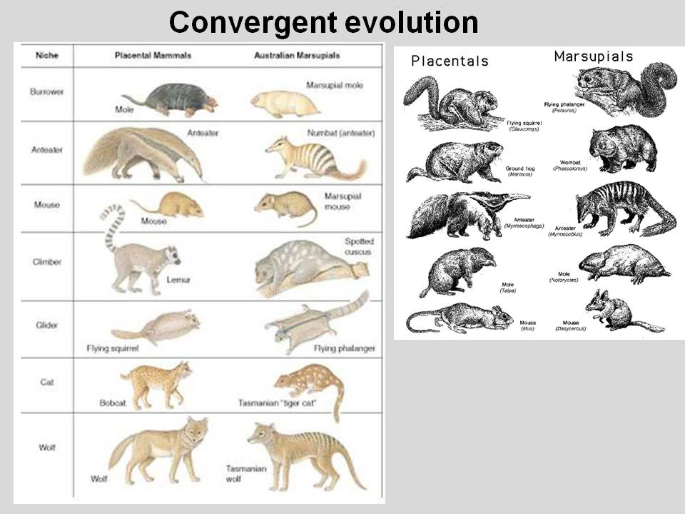 Convergent Evolution - ThingLink