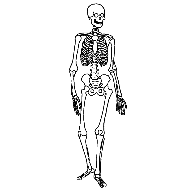 Skeletal System ByAlec Nitkowski ThingLink – Skeletal System Diagram Worksheet
