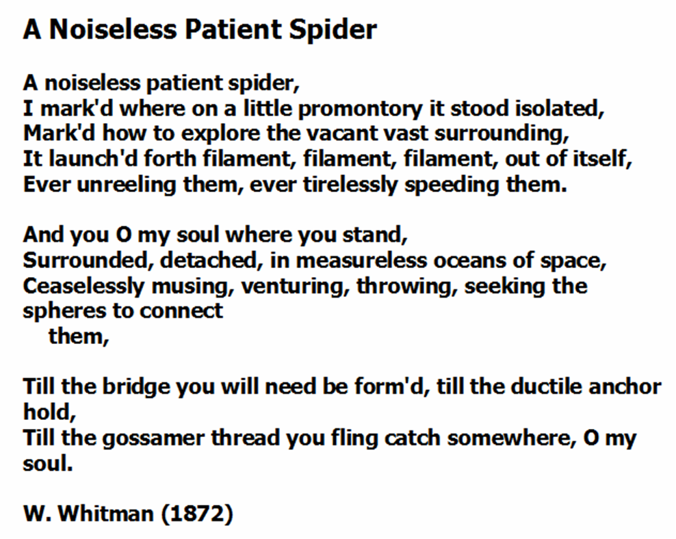 A noiseless Patient Spider