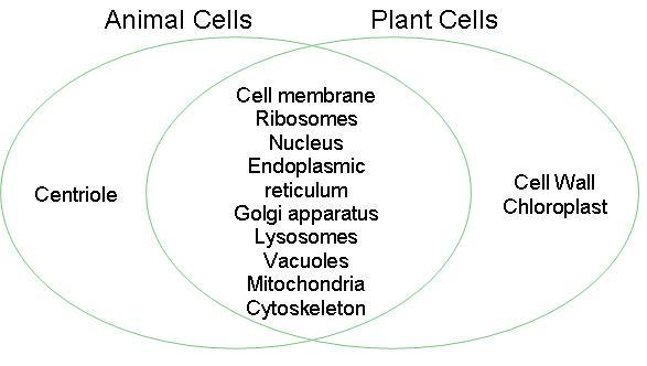 Animal Cells Vs Plant Cells