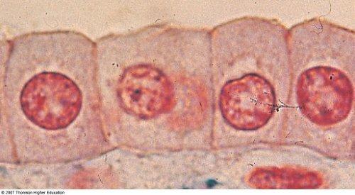 Eukaryote Under A Microscope Drake Skalberg 6th