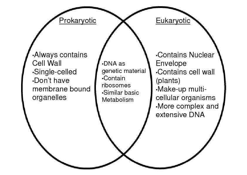 comparison chart of euokaryotic and prokaryotic cells