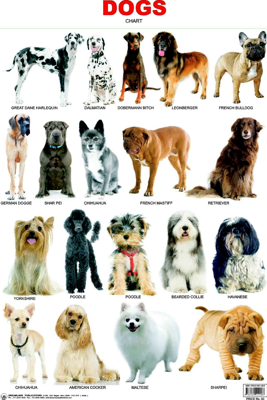 Dog Breeds Thinglink By Gabby