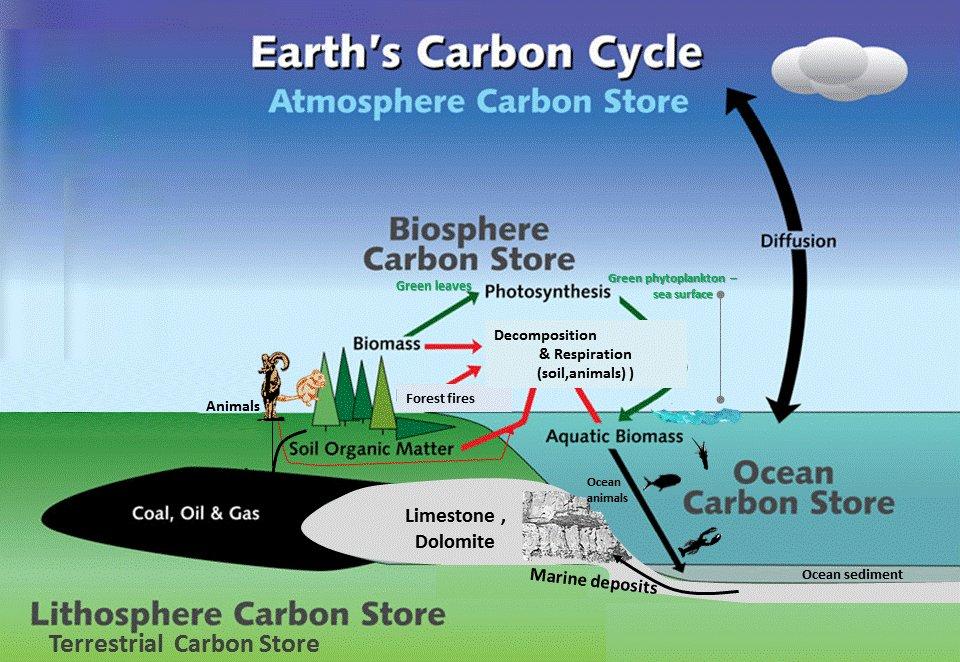 carbon cycle. Black Bedroom Furniture Sets. Home Design Ideas