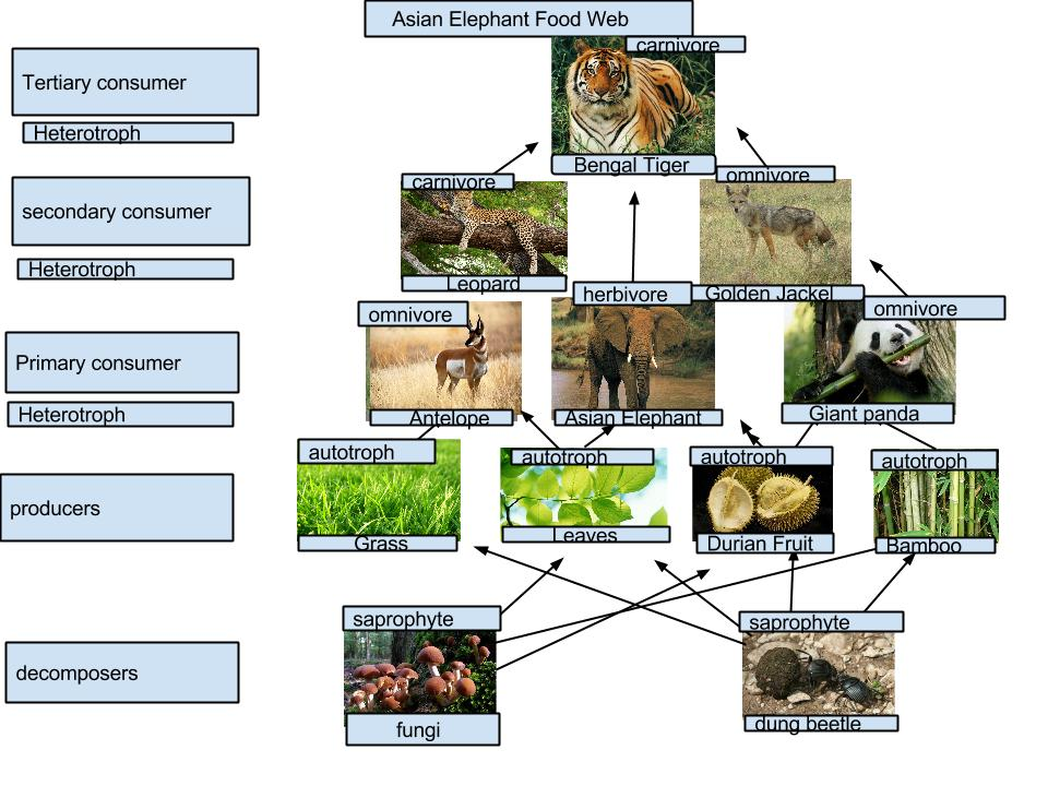 Food web of the southeast asian rainforest
