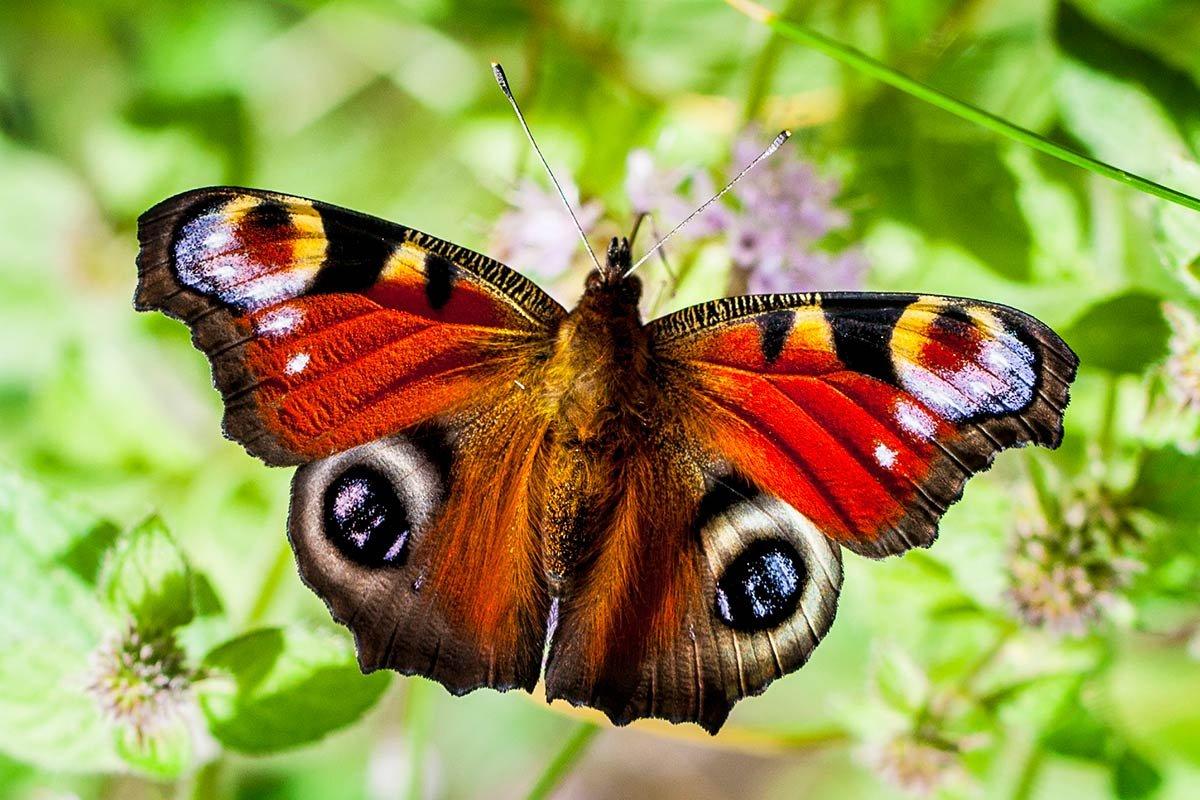 21 mooie kleurrijke vlinder - photo #10