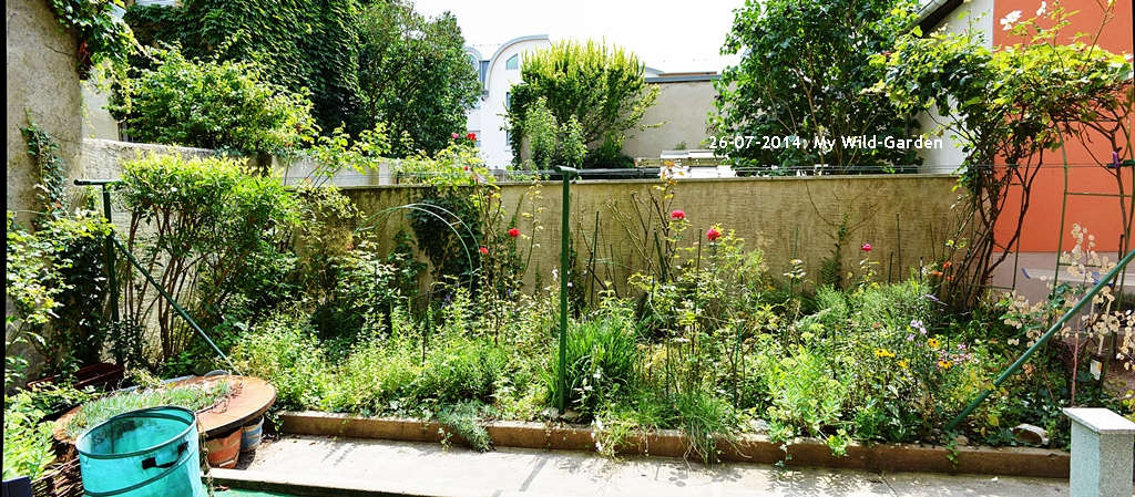 My Wild Garden | Panorama View With Localisation Of The Flow