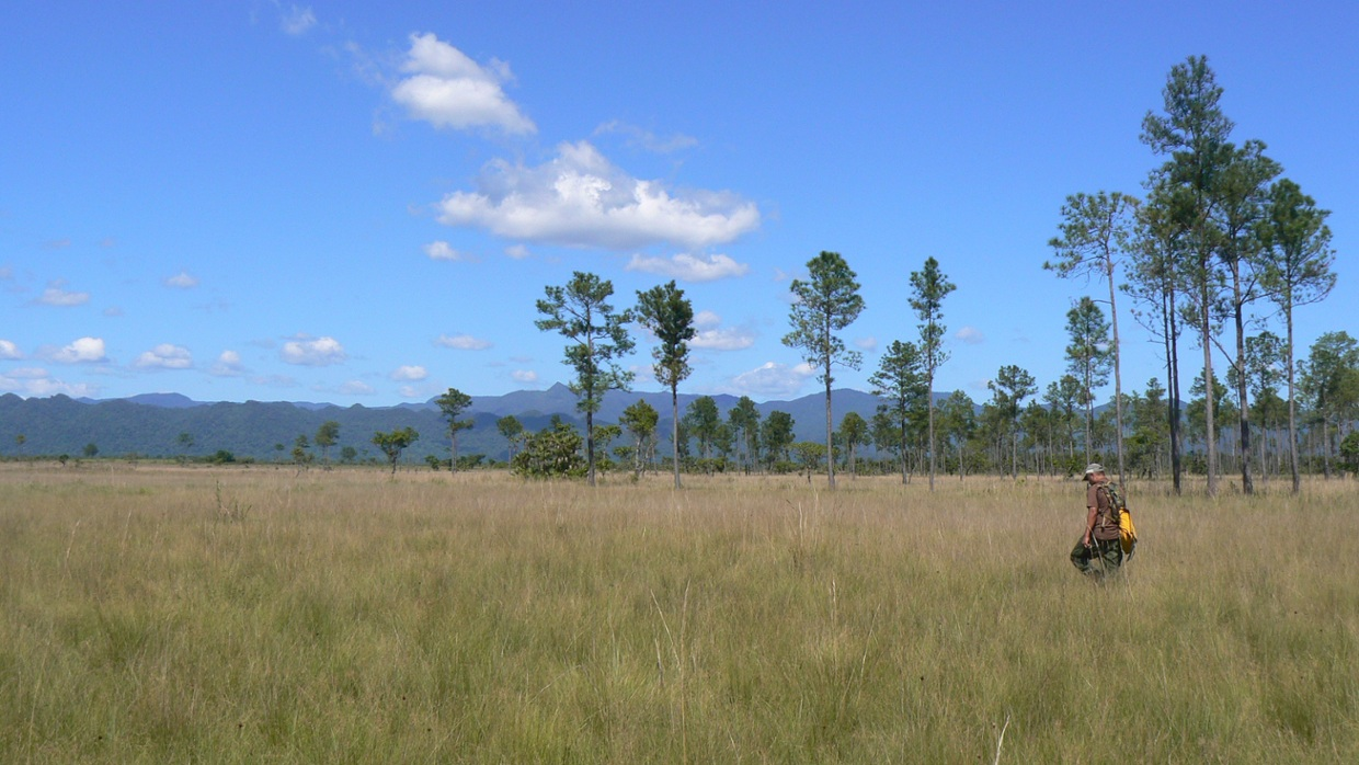 What Are The Biotic Factors That Goes With Grasslands In Africa 81