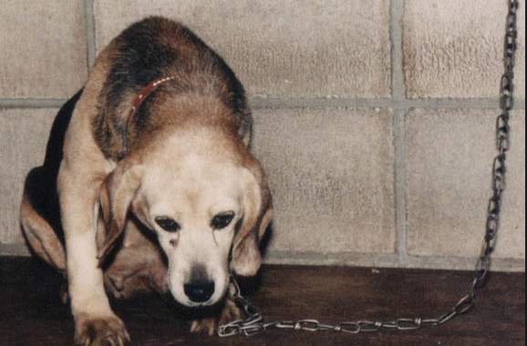 the issues with the animal testing Animal experimentation, by its very nature, takes a considerable toll on animals' lives as sentient beings in most cases, researchers attempt to minimize the pain and distress experienced by animals in laboratories but suffering is, nonetheless, inherent to animal-based research and testing.