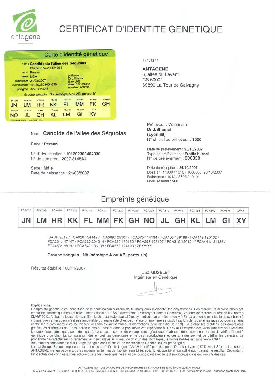 Comprendre Le Certificat Didentité Génétique De Mon Chat