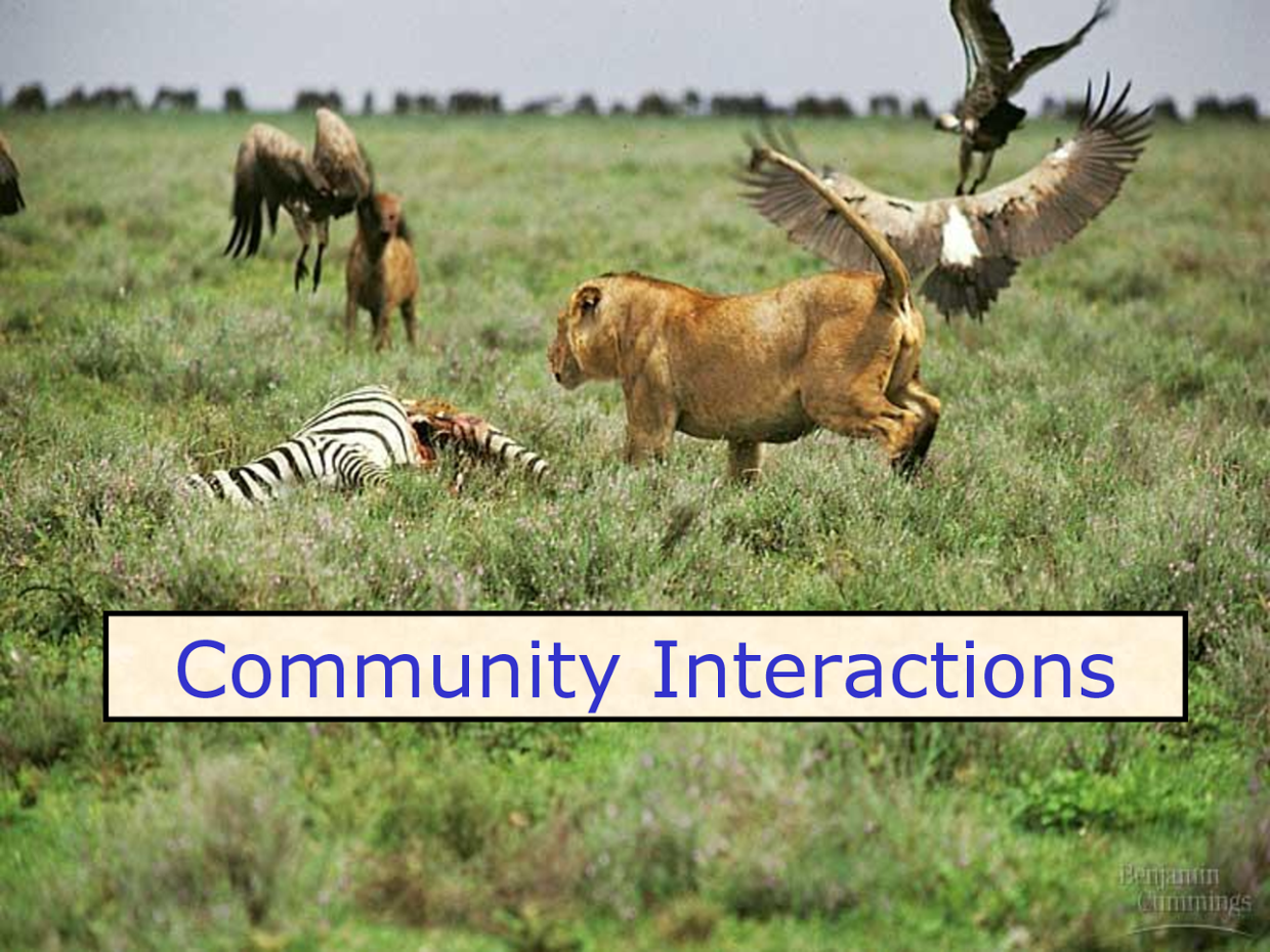 interacting amongst different communities A common distinction is made between primary groups and secondary groups   in other secondary groups, but their emotional ties and intensity of interaction.