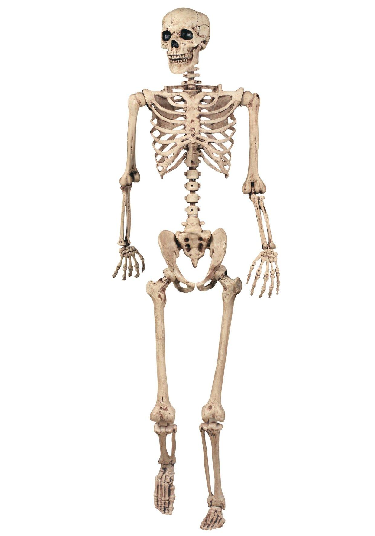 Skeleton: Bone Names - ThingLink