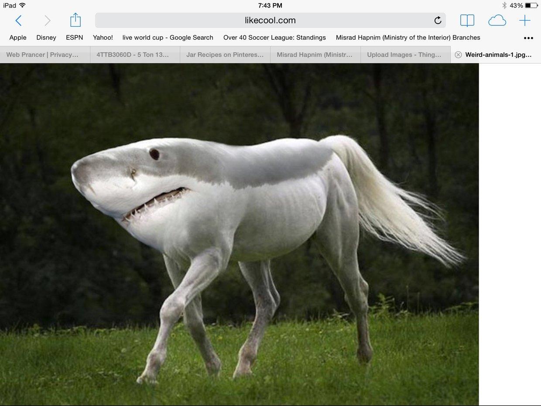 weird mix of a shark and a pony noah 15