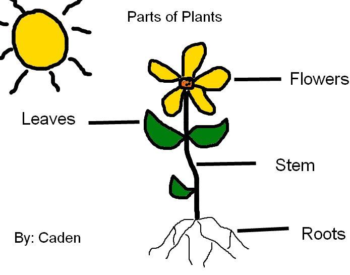 Plants, Growing Plants, Plant Labeling, Plant Labeling, M...