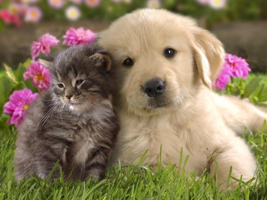 Puppies and kittens are so cute ThingLink