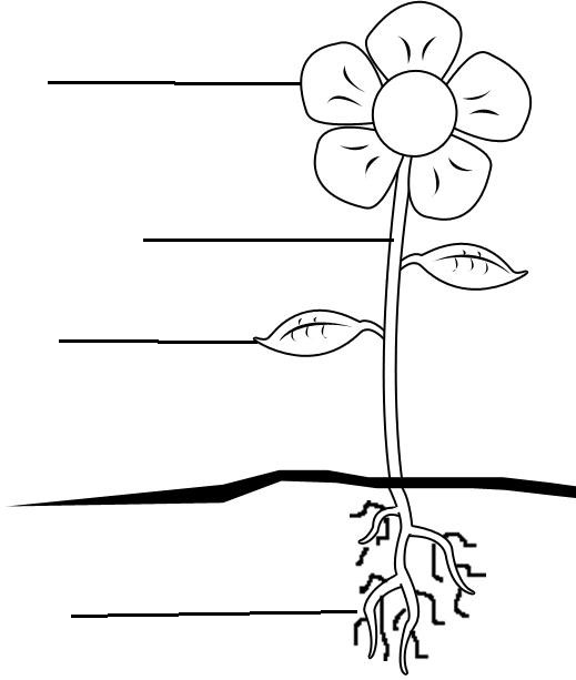 Petal, Stem, Leaf, Roots