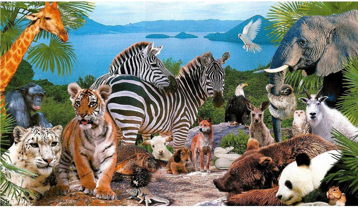 Картинка а презентации животный мир