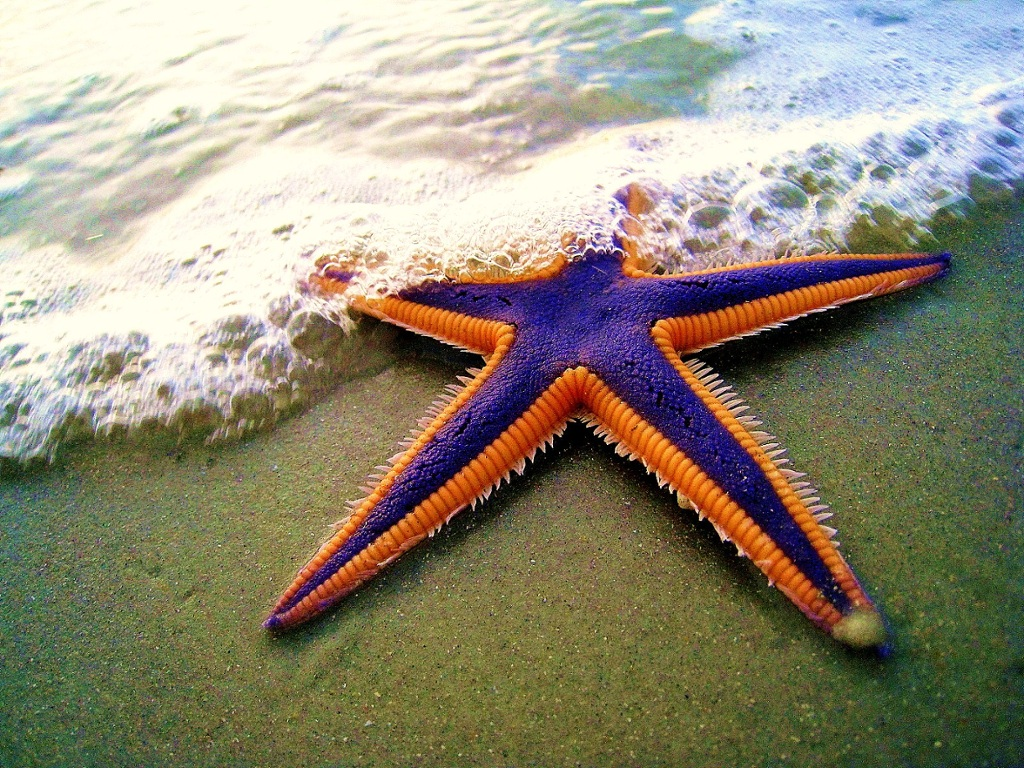 Starfish thinglink for Another word for ocean floor