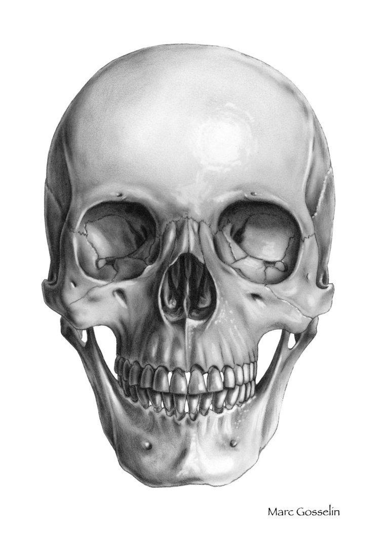 mildredwilson art work zoom basic head construction skull