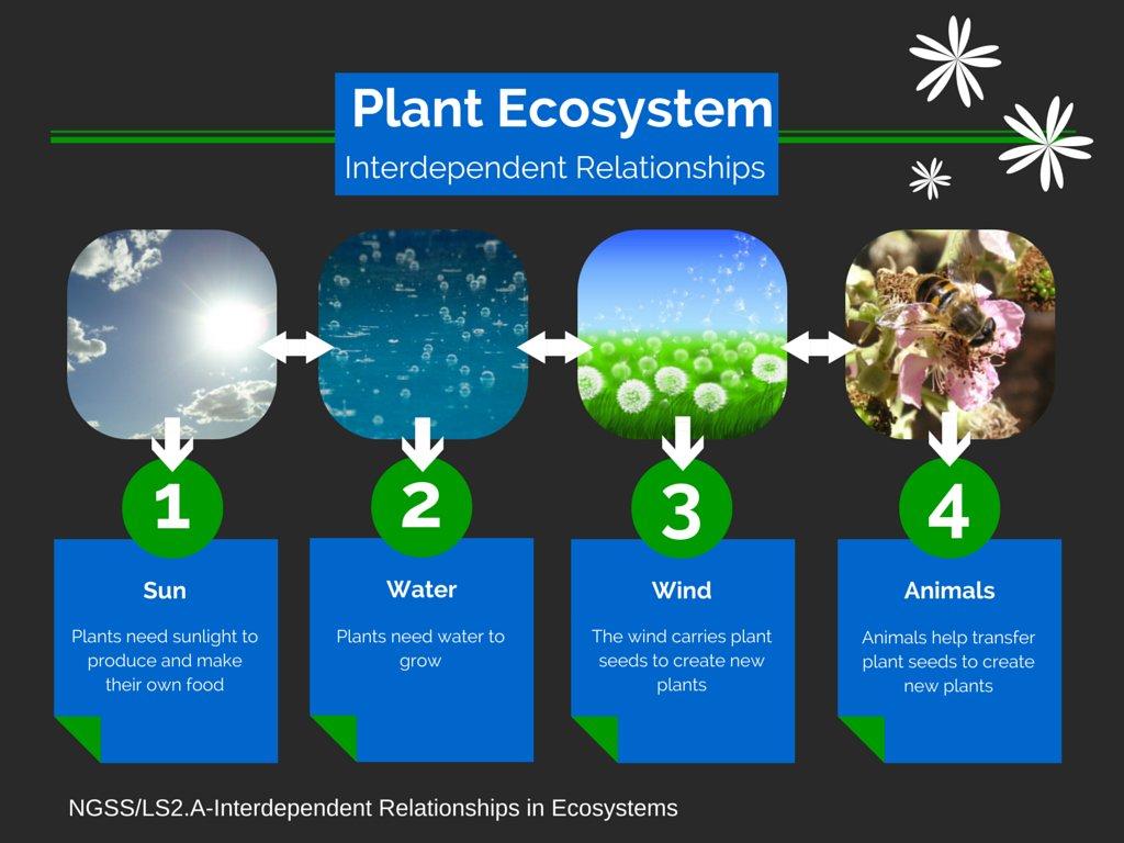 Plant Ecosystem