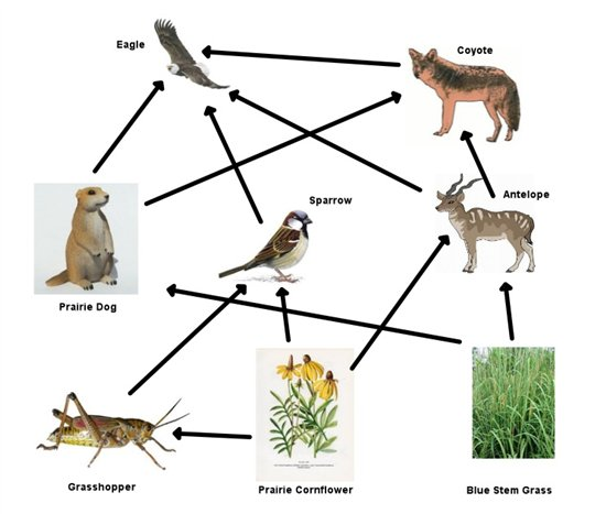 north american prairie food web  the coyote is a carnivor thinglink ecosystem clipart free ecosystem clipart