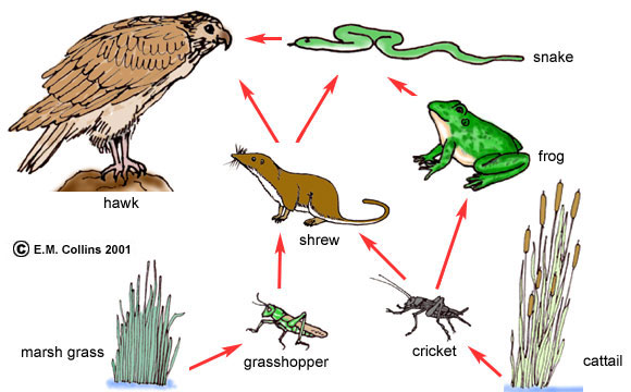 2011 05 01 archive also View as well 99983 additionally Food Chains furthermore Food Web. on decomposers in everglades
