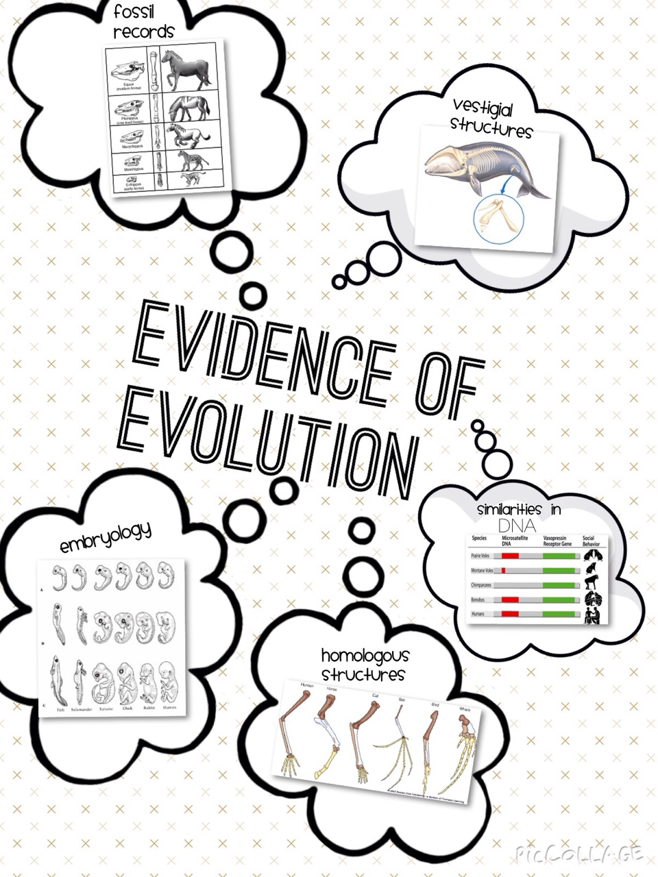 Hailey's Evidence of Evolution Project