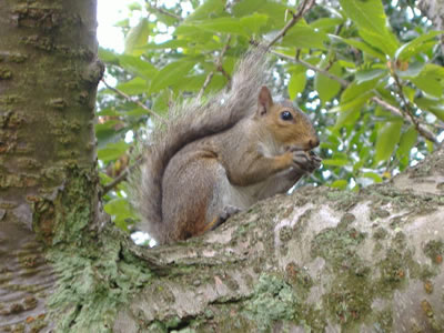Animals that live in the deciduous forest - photo#32