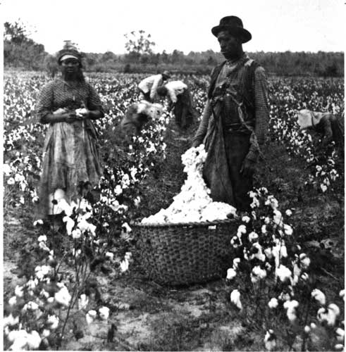 the creation of cotton gin that increased the demand for slavery during civil war Cotton gin essay examples 9 total  the creation of cotton gin that increased the demand for slavery during civil war 1,000  a discussion of the three important causes of the american civil war 826 words 2 pages the.