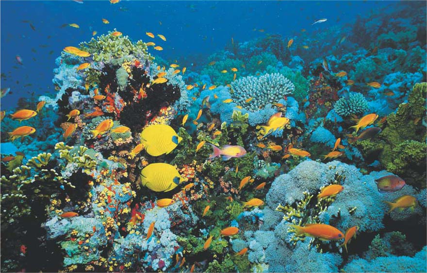 marine biomes Marine biomes powerpoint presentation, ppt - docslides- importance of marine biomes oceans represent the largest and most diverse of the  ecosystems salt  water evaporates and turns to rain which falls on the land regions, while most of the oxygen in our atmosphere is generated by algae.