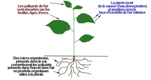 The roots are like straws they give water to the plant, L...