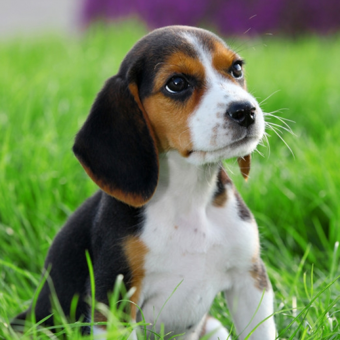 Cute puppies thinglink voltagebd Image collections