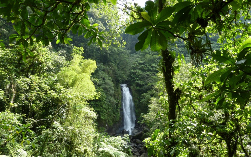 what is the ecosystem of the tropical rainforest