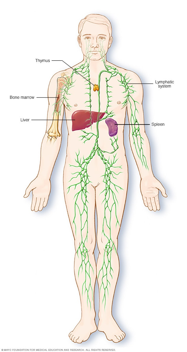 Lymphatic system thinglink 3 years ago 410 ccuart Image collections