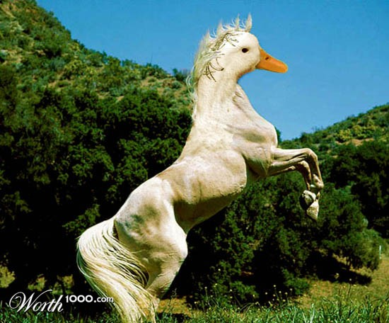 it is a duckhorse it is on th cool plant cause things th