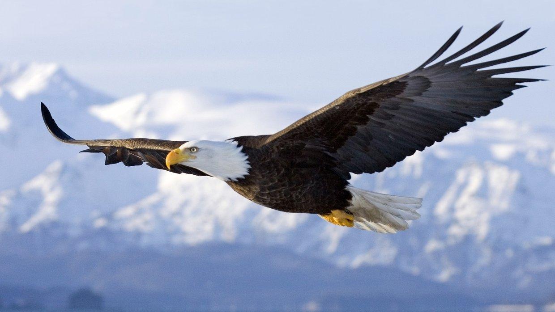 Image result for bold eagle