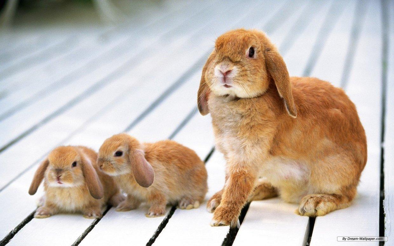 Rabbits by Destiny Contreras