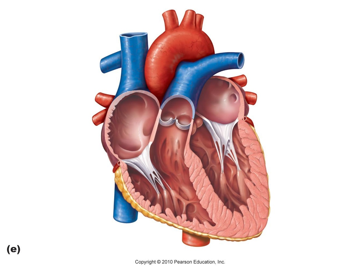 Heart diagram thinglink 3 years ago 931 ccuart Image collections