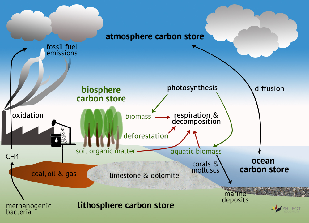 The Carbon Cycle Diagram.4 1 Essential Ideas 4 1 3 Carbon Cycling