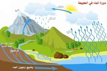 تقرير عن دورة المياه في الطبيعة