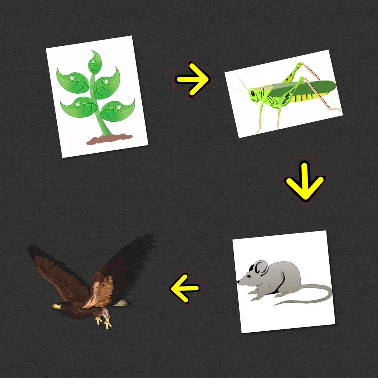 Food chain example.