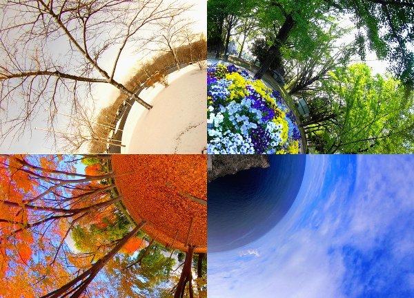 Four seasons tree | Mental Health Recovery