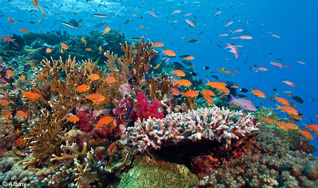 the characteristics of the coral reef habitats People and coral reefs: coral reef ecosystems are important for many reasons they remove and recycle carbon dioxide, which is a gas.