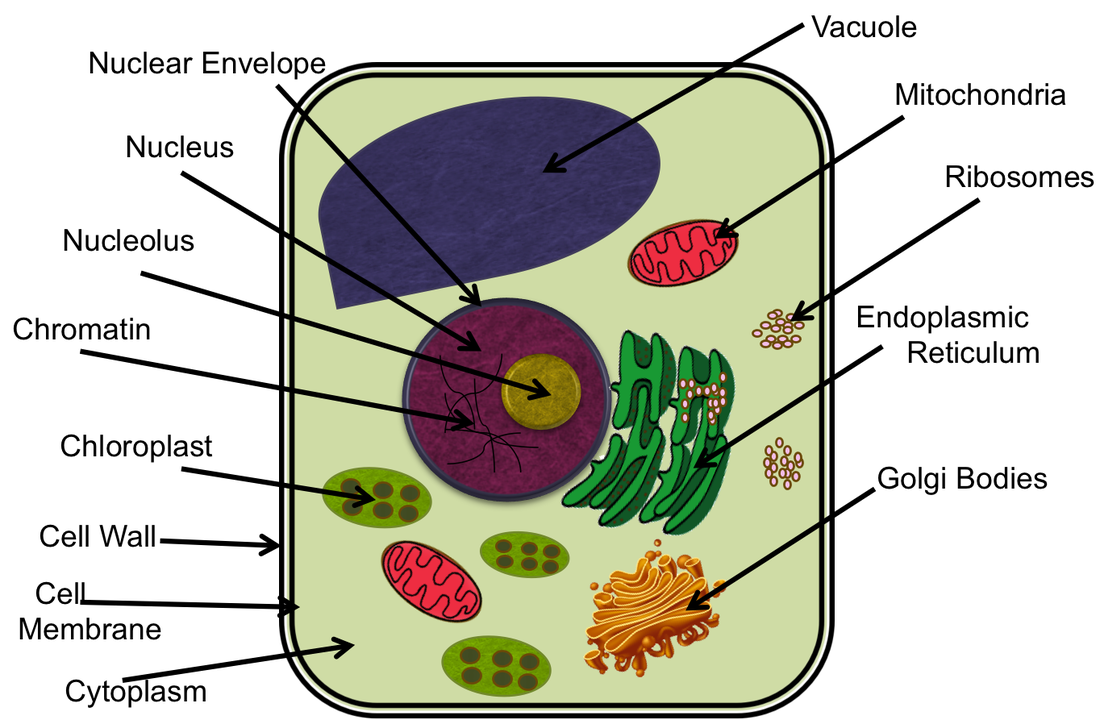 chromatin in a cell model - photo #18